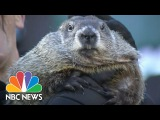 Punxsutawney Phil Says An Early Spring Is On The Way | NBC News