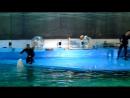 Дельфинарий.Белуха Полина и моржиха Соня поют!(эпизод 5)