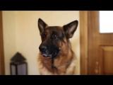 Видео-кастинг Вивата - 13. 2014 год