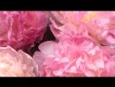 «розы» под музыку Крис Норман - Stumblin In. Picrolla