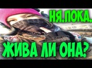 Рина Паленкова Факты о смерти за 11 12 2015 Бросилась под поезд со словами ня пока