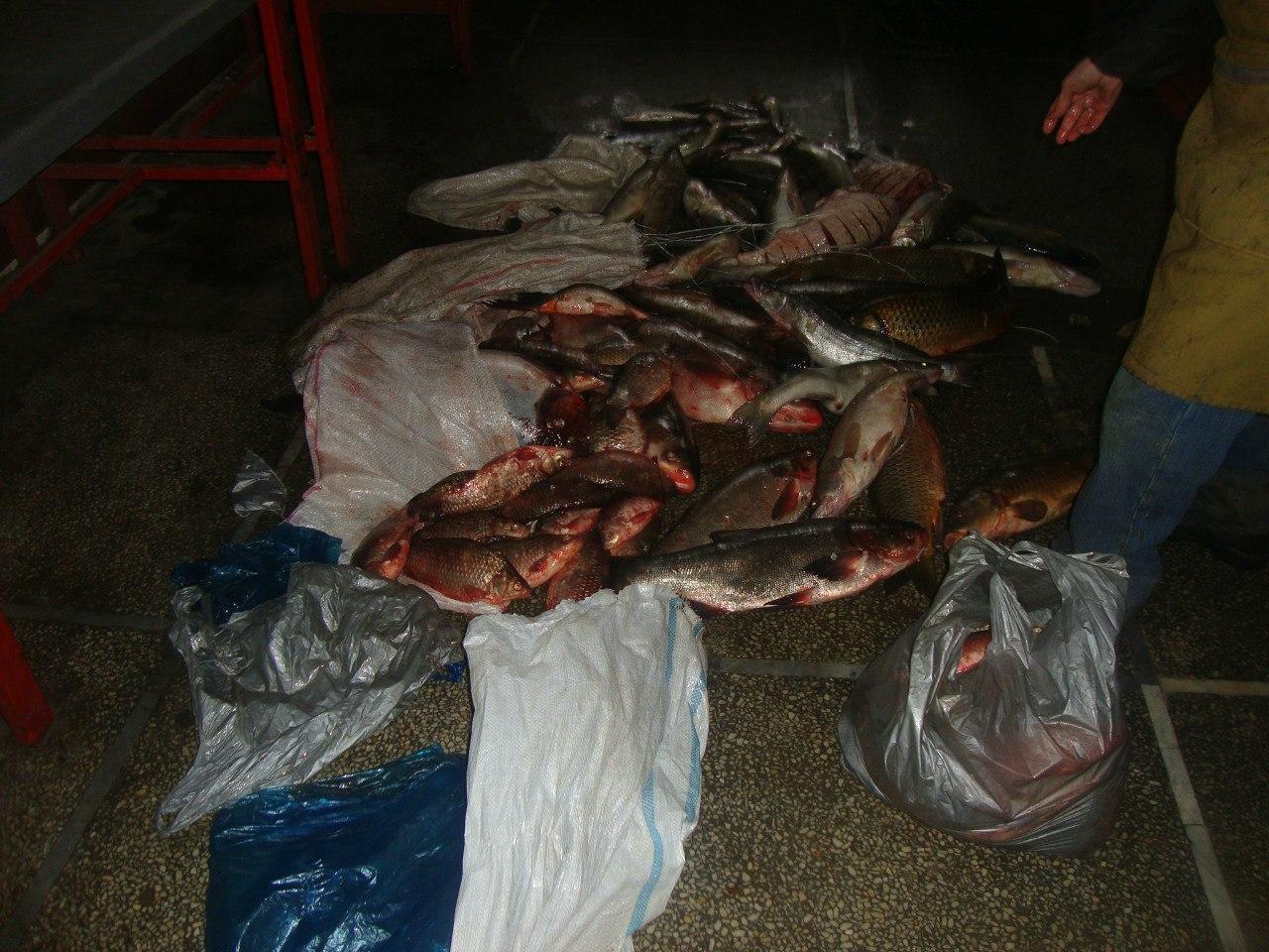 На Центральном рынке города Ростова-на-Дону изъяли 204 кг рыбы и 6,4 кг икры неизвестного происхождения