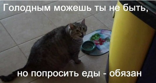 https://pp.vk.me/c630323/v630323684/65c1/o0jiWVYgM0k.jpg