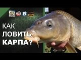 Как ловить карпа? Ловля карпа. How to catch carp?