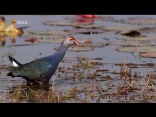 Дикая природа Таиланда. Фильм 1-й / Wild Thailand (2013) HD