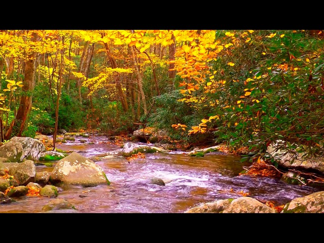 Relaxing Music - Nature Sounds - Autumn Forest HD