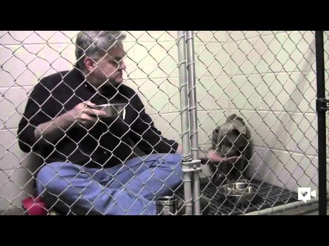 Ветеринар завтракает в клетке со спасенной собакой.