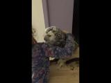 Самая няшная сова и маленькая девочка