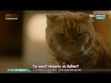 Кошка моей мечты / Imaginary Cat [4/8]