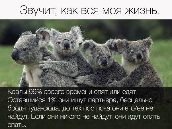 http://cs630325.vk.me/v630325737/276b1/ksCTxcEsVL0.jpg