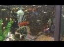 Польза соли и марганцовки в аквариуме