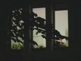 Kammerflimmer Kollektief - Nachtwachte, 15. September