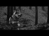 Behemoth - Blow Your Trumpets Gabriel UNCENSORED (Death  Black Metal)