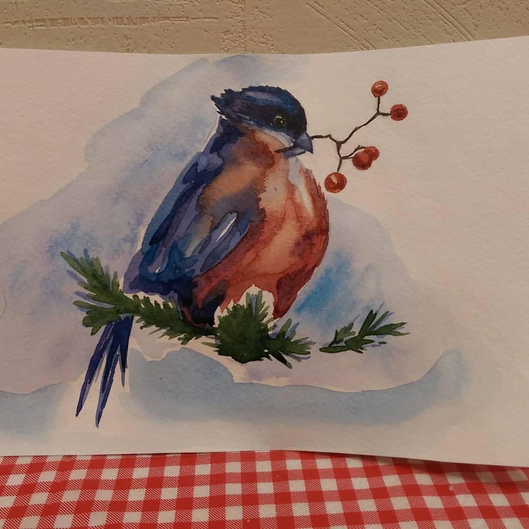 акварель снегирь рисунок