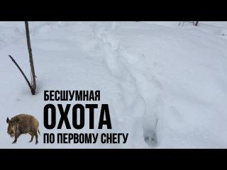 Охота в Украине. Бесшумная охота браконьеров на кабана на петлю по первому снегу