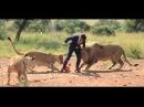 Мужик играет в футбол с львами