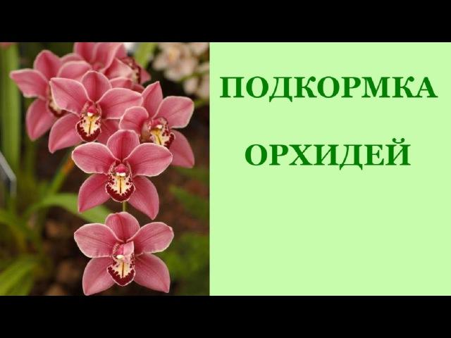 Фаленопсис. Подкормка орхидей. Когда их удобрять?