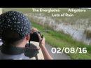 The Everglades, Alligators, Lots of Rain - 02/08/16 - Huntley Brothers