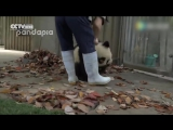 Самая мимимишная панда эвер)