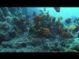 Королевство океанов 2011 народ рифов