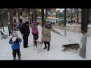 Соревнования в парке на собаках 064