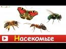 НАСЕКОМЫЕ для ДЕТЕЙ Развивающие ВИДЕО про насекомых для детей в HD качестве