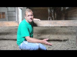 Рождение жирафенка в Тайгане
