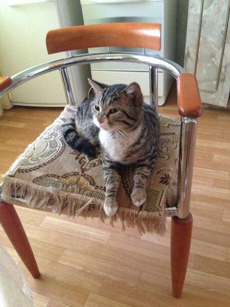 Молодой, ласковый, послушный котик ищет любящих хозяев. Он очень споко