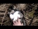 Выбор охотничьей собаки (Как выбрать щенка лайки)