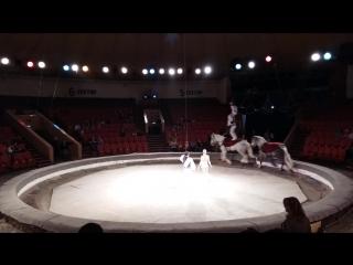 Старейшая Цирковая Династия (Александровы-Серж),,Курс