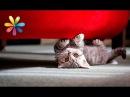 Как отучить кошку точить когти о мебель – Все буде добре. Выпуск 767 от 02.03.16