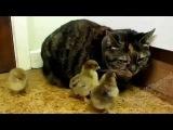 Смешное видео про животных.2 Смех до слез