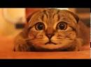 ホラー映画を見ている猫が超かわいい Super cute cat watching a horror movie