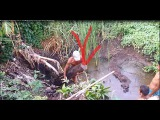 Fishing Traditional guide in the country recently thailandwild animals