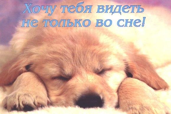 Картинки с прикольными собачками спокойной ночи приятных снов, пользовании электричеством нельзя