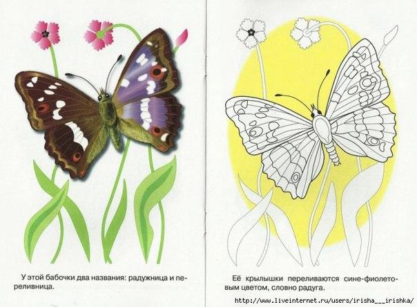 Примеры в раскраска бабочка