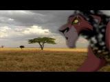 Le Roi Lion X Rom