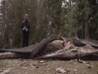 Primeval: New World - Pteranodon