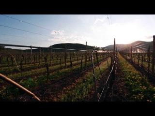 Le jardin des Vins d'Alsace