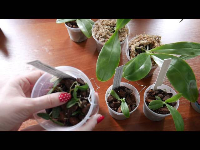 Немного про молодые растения от Швертера