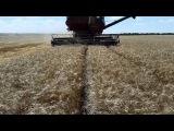 Комбайн НИВА СК-5М-1 уборка пшеницы