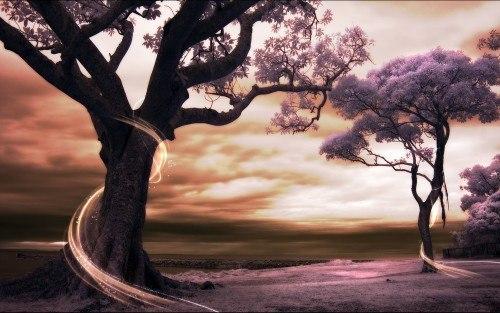 Попросить сил у деревьев.