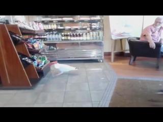 Чайка зашла в кафе, забрала пакет с чипсами и спокойно ушла, не заплатив