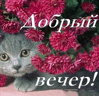 http://cs630331.vk.me/v630331150/1cd9c/xELGNa_Vhy8.jpg