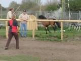 Маленькие барьерчики для слабаков, что скажете? А у лошади талант.
