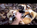 Необычная дружба человека с диким животным:))