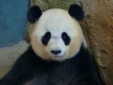 Les beaux animaux du ZOO DE BEAUVAL - Le Reportage par Francois Ville