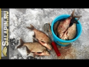 Экшн рыбалка на водохранилище, подлещик, густера