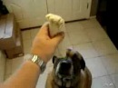 Dog eats Bean Burrito in 1 second