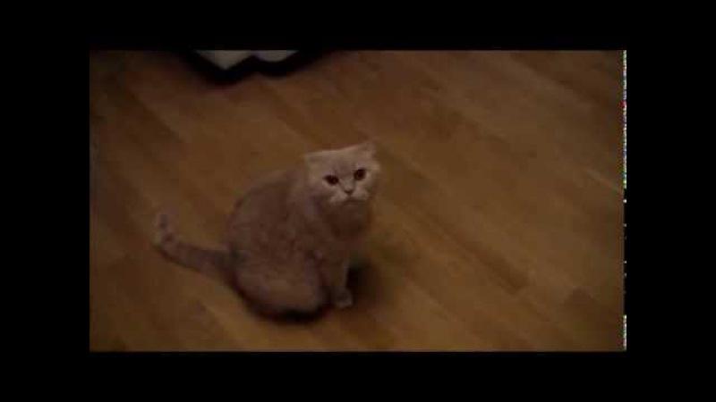 Смешной кот поёт со своим хозяином...